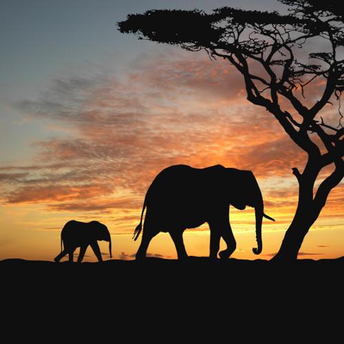 Слонов не желаете?
