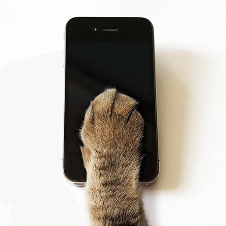 Mobile First: причём тут котики?