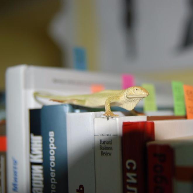 Библиотека имени Сибирикса — упорядочиваем круговорот книг в офисе